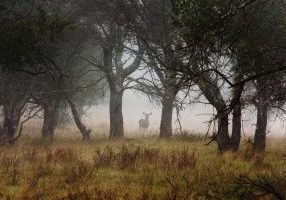 Deer_in_Forest_by_xelement